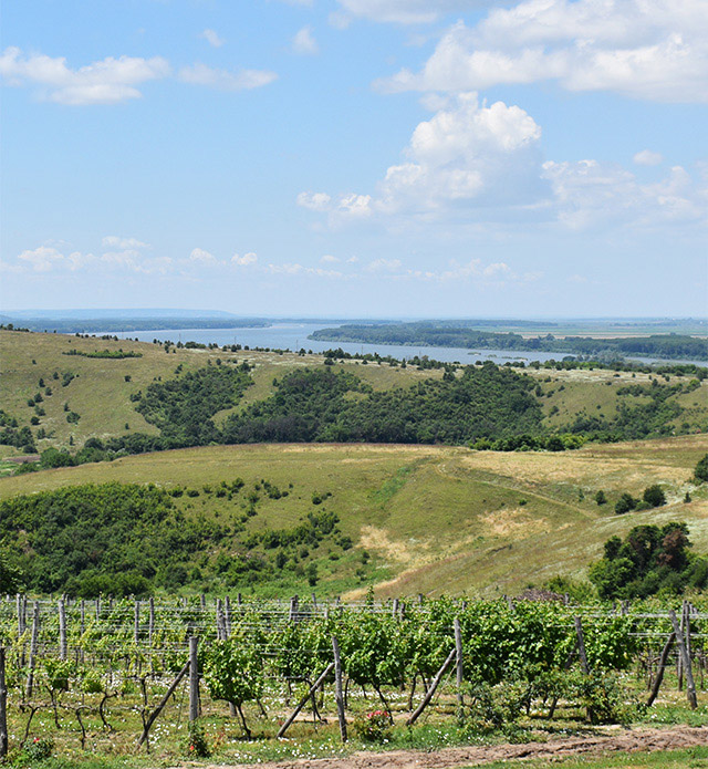 Пейзаж с река Дунав