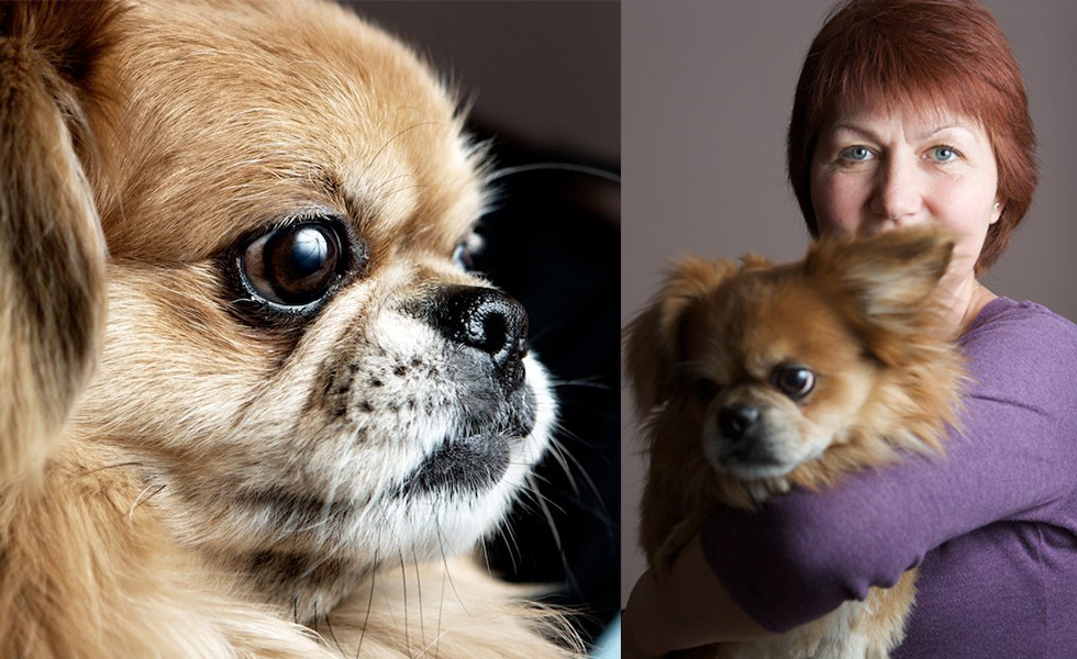Портретна фотография на куче с име Чоки