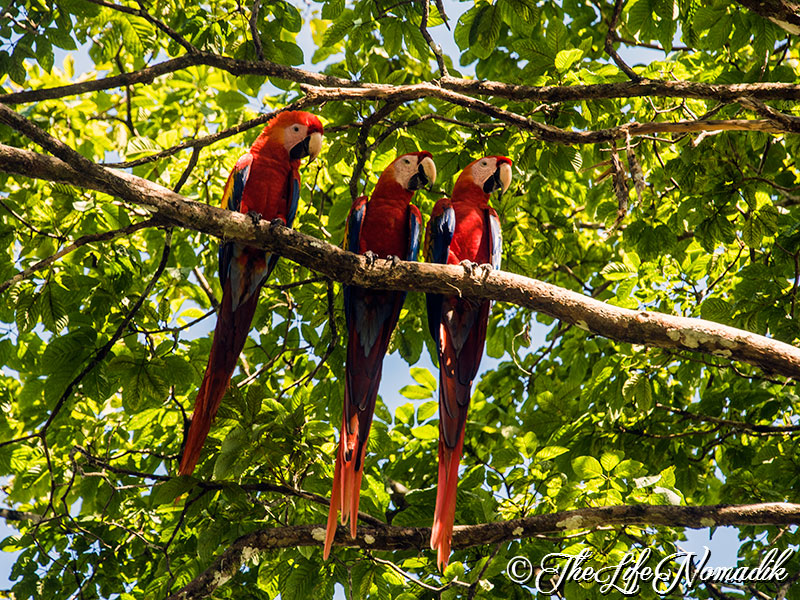 Екзотични папагали