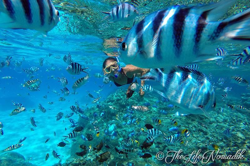 Подводна снимка на коралов риф с риби