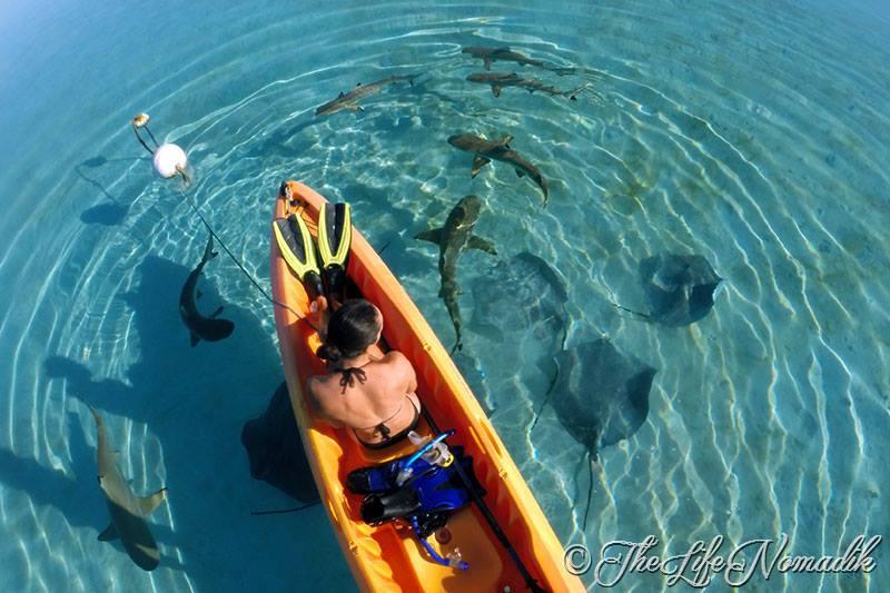 Кану около него акули