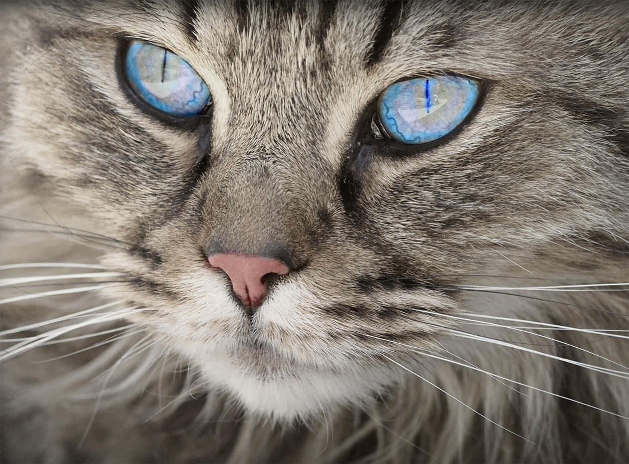 Котенцето Кити: най-сладкото коте в света