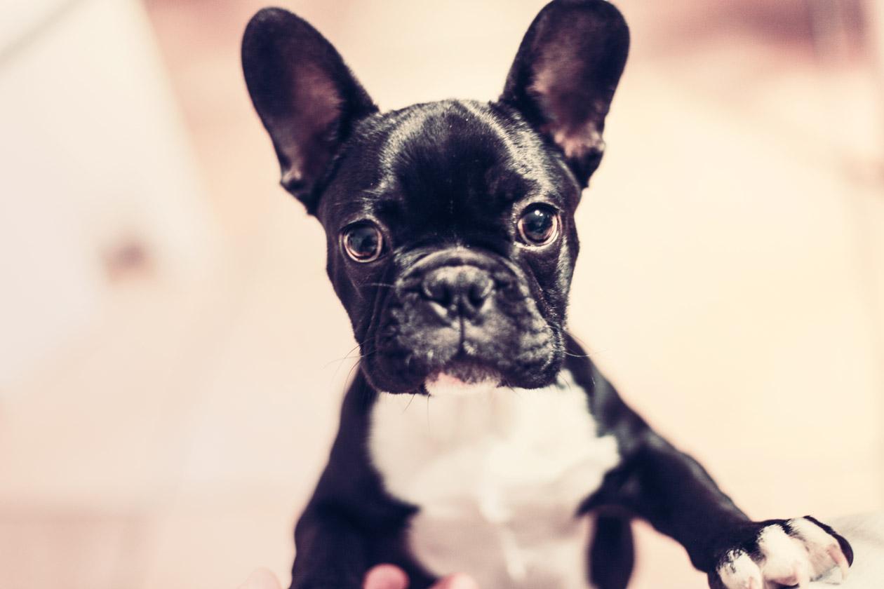 Кученцето Луси: най-сладкото куче в света