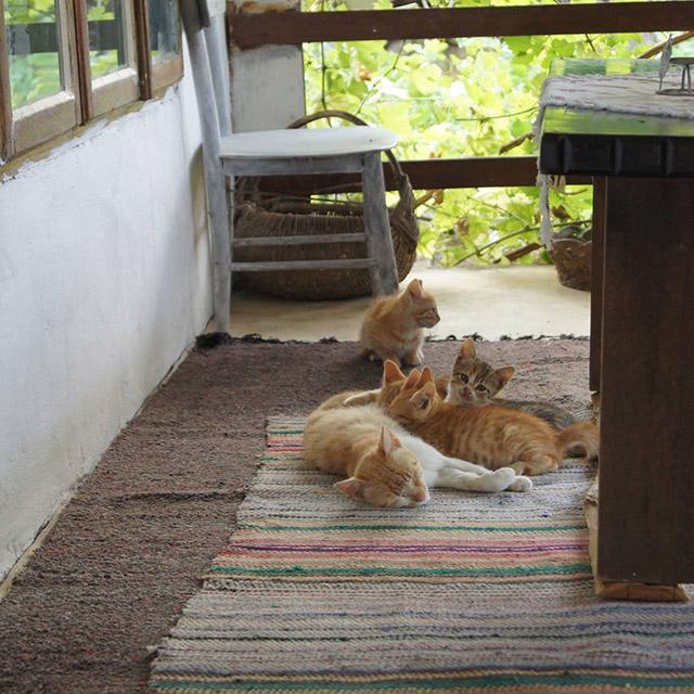 сладки котенца на село