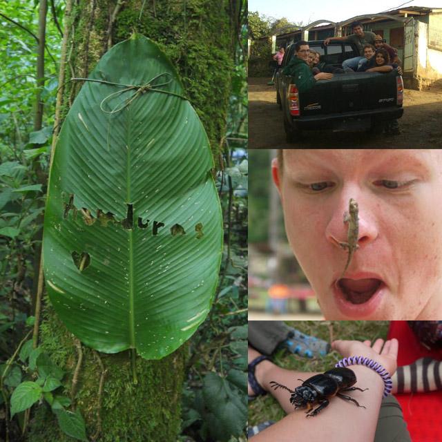 джунгла в Хондурас