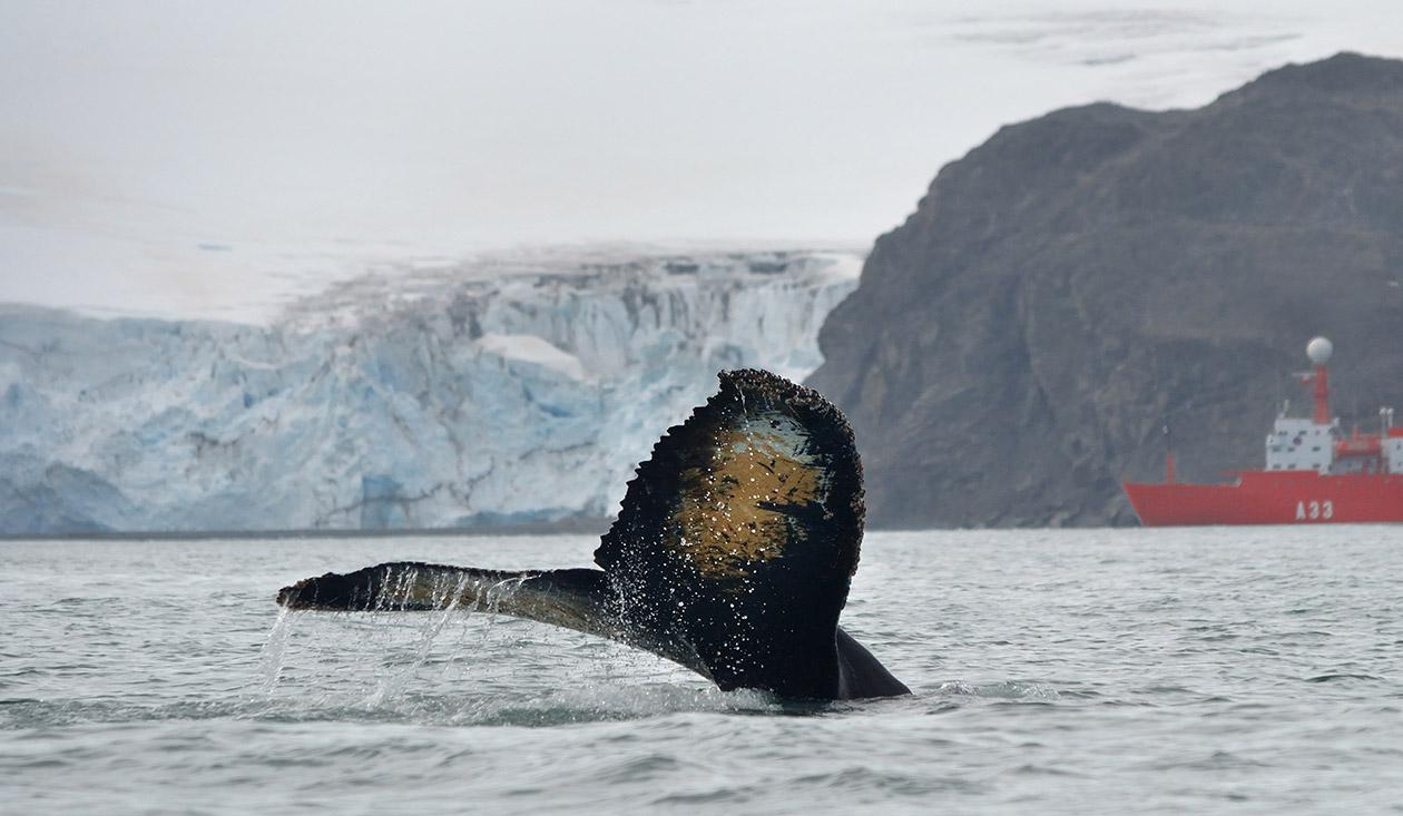 Опашка на кит и кораб