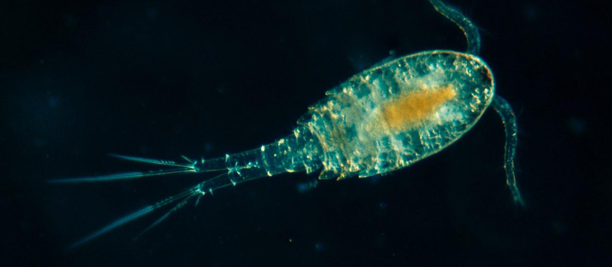snimka-pod-mikroskop-6