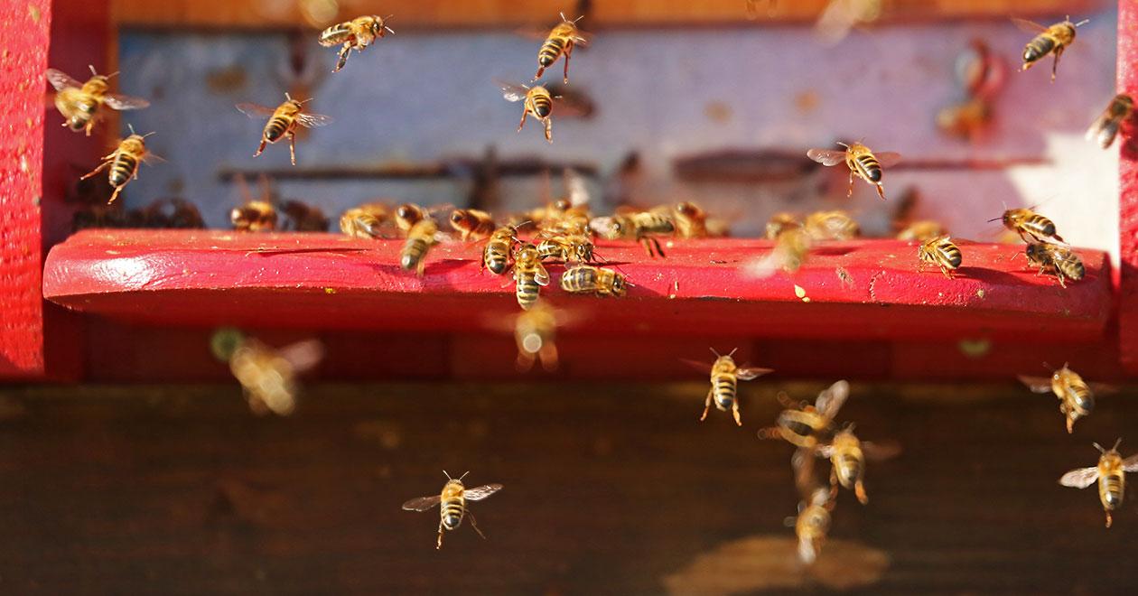 Пчелен музей в София