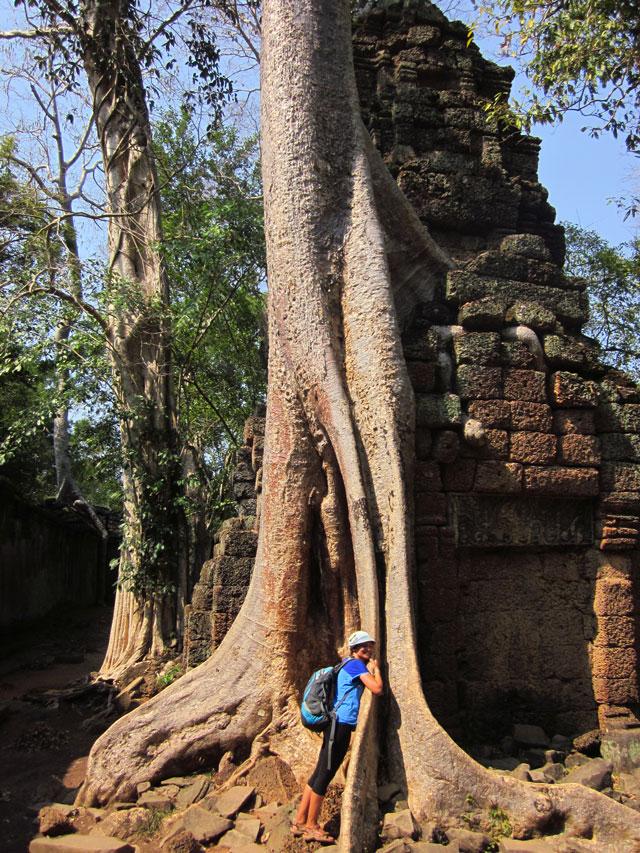 Огромно дърво