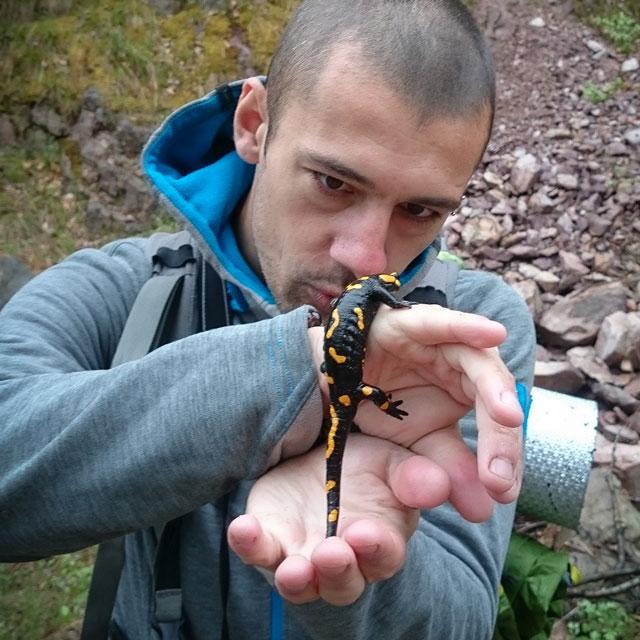 Саламандър в България