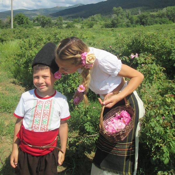 Бране на българска роза